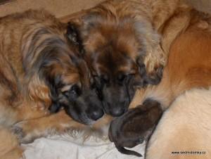 """Fury Ann a jeji dcery Erki, hrající si na maminku malé """"G"""""""