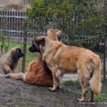 Harley, Ginger, Erki