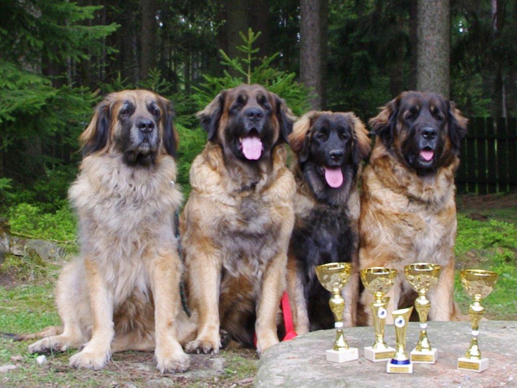 Fury Ann, Erki, Jori, Ginger